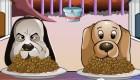 gratis : Competición de perros