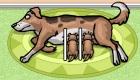 gratis : Cuidar cachorros de perro
