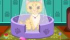gratis : Cuidar a gatos