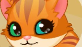 gratis : Cuidar de un gatito