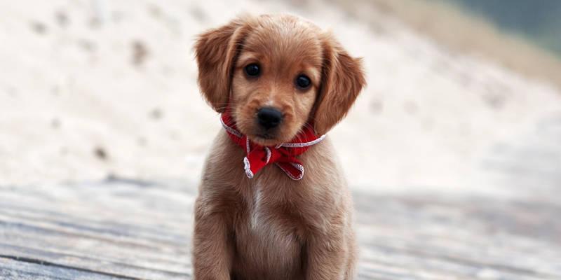 Los Cachorros De Perro Más Monos De Internet Blog De Cosas
