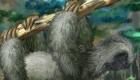 gratis : Jugar con una mascota perezosa
