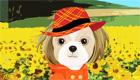 vestir : Kim el perro