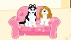 Una pensión para perros