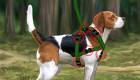 Juego de Lassie