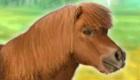 Mi mascota poni