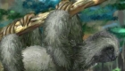 Jugar con una mascota perezosa