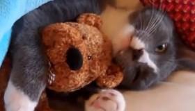 ¡Un vídeo de gatos adorables y super graciosos!