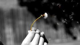 Un genio aparece y te concede tres deseos. ¿Cuáles son tus tres deseos?