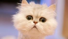 Los vídeos de gatos más divertidos