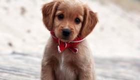 Los cachorros de perro más monos de Internet