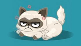 ¿Qué gato superestrella eres?