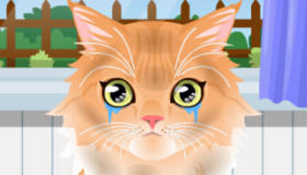Gatito adorable